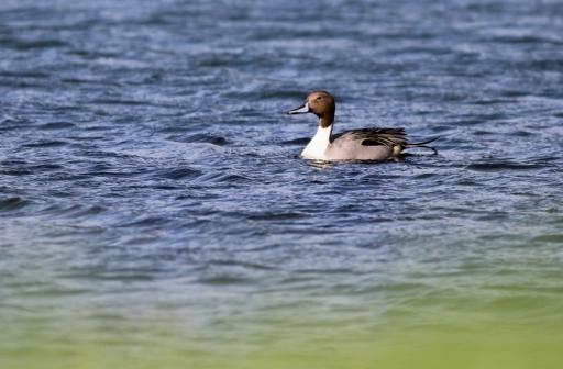 Arrabio na Lagoa Azul (Foto: Gerbrand Michielsen)