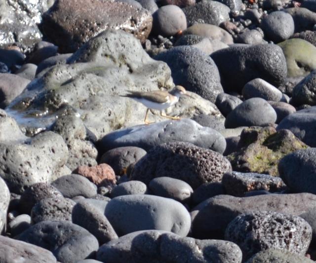 Desconhecida - baia da lagoa - São mates - equipa Hydrobates